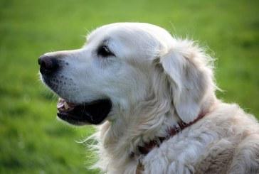 פיצוי גבוה בעקבות תקיפת כלב