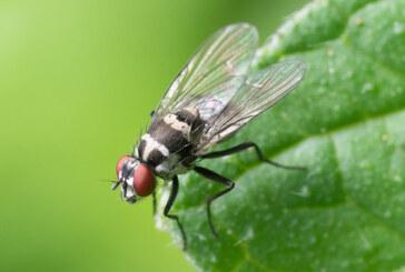 פיצוי עתק בגלל חרק מעופף
